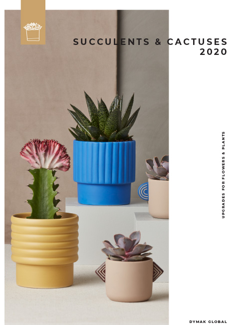 Succulents cATALOGUE